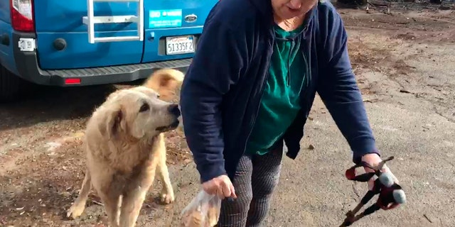 Shayla Sullivan, an animal rescuer, left food and water for Madison during his wait. Gaylord fled when the Nov. 8 fire destroyed the town of 27,000. (Shayla Sullivan via AP)