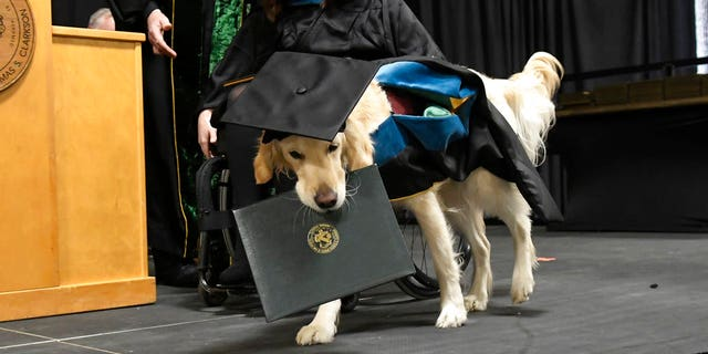 "Clark University's Board of Trustees honored Griffin for what they said was ""extraordinary effort, steadfast commitment and diligent dedication to the well-being and student success"" of his handler."