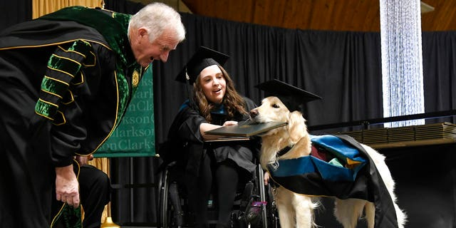 """""""Griffin,"""" a 4-year-old service dog to Brittany Hawley, was presented with an honorary degree Saturday at Clarkson University as his handler received a master's degree in occupational therapy."""