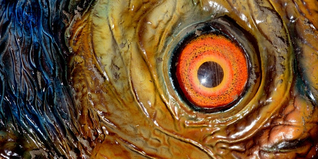 File photo - The eye of a life-sized dinosaur replica is seen in Wustermark, Germany, 23 March 2015.