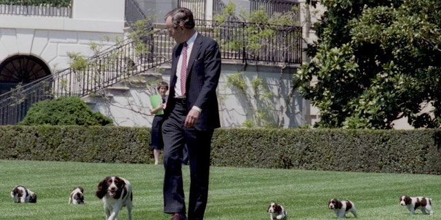 President Bush walks with Millie and her puppies on the White House lawn, April 20, 1989.