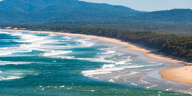The shark attack happened Sunday near Scotts Beach, located about 300 miles north of Sydney.