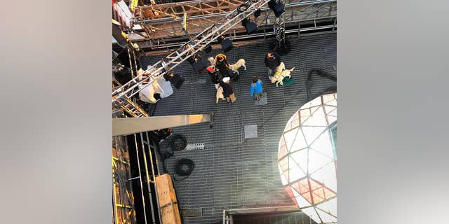The pups were a little hesitant to step out onto the industrial grating on the roof of 1 Times Square, but soon found their footing.