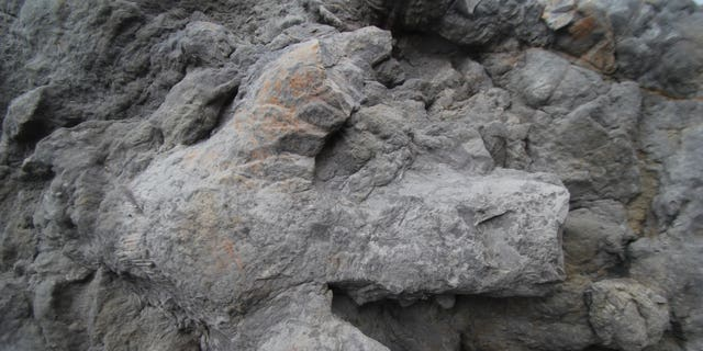 A large iguanodontian footprint found in Hastings, East Sussex.