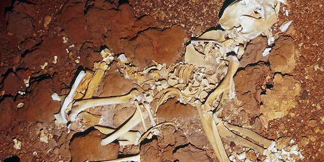 The skeleton was reconstructed in its entirety for the first time.