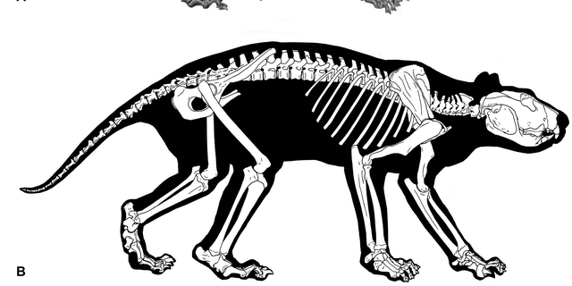 The prehistoric creature was a predatory animal that likely used its tail and hind legs a support when handling prey.