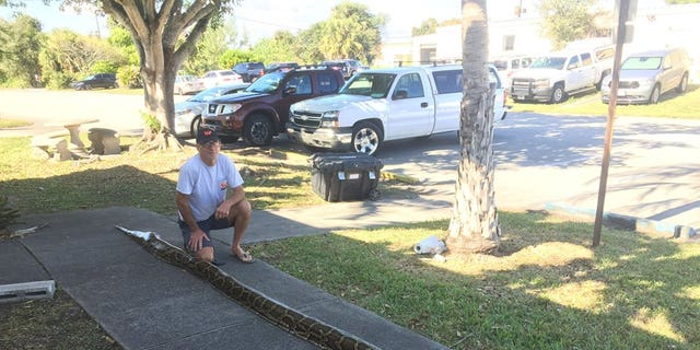 The Florida man's python broke the record for the biggest captured in the state thus far.