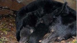 Alaska dad, son sentenced for killing mother bear, 'shrieking' newborn cubs
