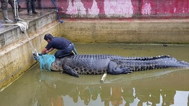 Indonesian woman mauled to death by massive pet crocodile