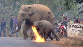 Indian village mob lobs firebombs at mother, baby elephants to protect their property
