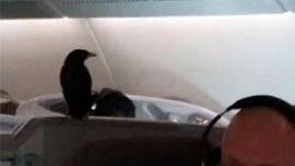 Bird stows away on 12-hour Singapore Airlines flight