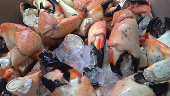 Florida red tide hurts stone crab industry
