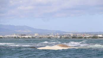 Hawaii swimmers stealing dead whale's teeth, climbing on body warned to stay away as dozens of sharks swarm
