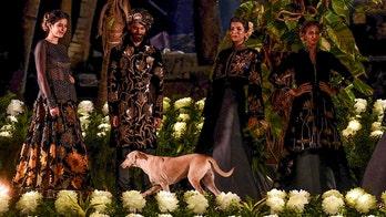 Stray dog crashes runway at Mumbai fashion show, goes viral on Twitter