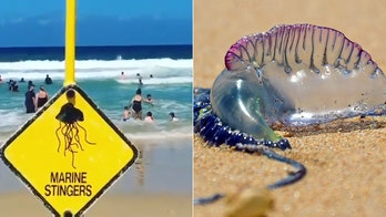 Thousands stung by 'wall' of jellyfish in Australia