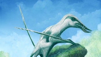 Massive, ancient flying reptile had 'large fangs' that formed 'a toothy cage'