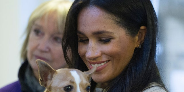 """Meghan The Duchess of Sussex holds Jack Russel dog called """"Minnie"""" during her visit to Mayhew animal welfare charity on Wednesday Jan. 16, 2019, to meet with volunteers to hear about welfare initiatives, community engagement and international projects carried out by the charity. This is Her Royal Highness's first official visit to Mayhew in her new role as Patron of the charity. (Eddie Mulholland/pool via AP)"""