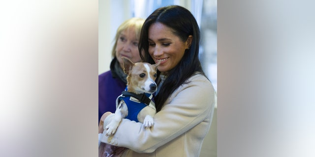 "The Duchess of Sussex holds Jack Russel dog called ""Minnie"" during her visit to Mayhew animal welfare charity on Wednesday Jan. 16, 2019, (Eddie Mulholland/pool via AP)"