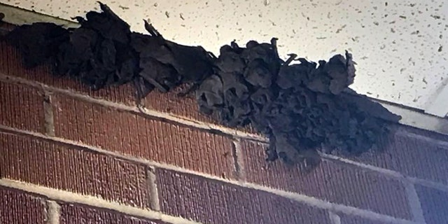 The bats may have entered the school through a vent or opening. (KATC)