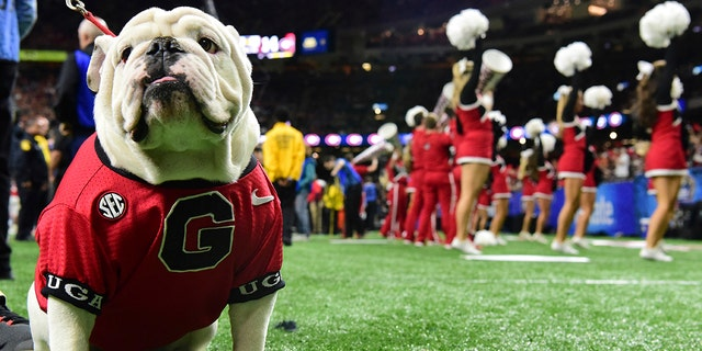 Uga the bulldog cheers on the University of Georgia as they take on the University of Texas at the 2019 Allstate Sugar Bowl at the Mercedes-Benz Superdome on Tuesday, Jan. 1, 2019, in New Orleans.