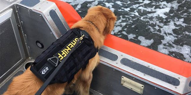 Jake, pictured here on a vessel with the Coast Guard in December, experienced seizure-like symptoms and lost motor skills when he detected the drugs.