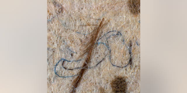 Close up of one of Leonardo's works showing insect parts and wool fibers
