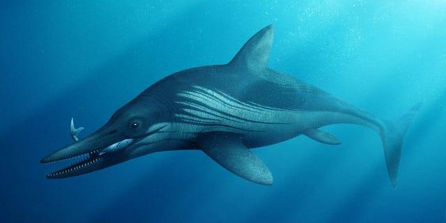 Artist's impression of the ichthyosaur.