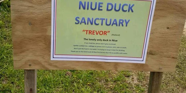 "The ""world's loneliest duck"" has met a sad end. (Niue Facebook page)"