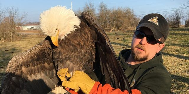 The bird was rescued by MDC Wildlife Damage Biologist Josh Wisdom. (MDC)