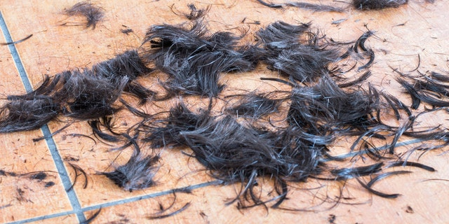 No need to shave your head. Make sure the hair is composted when it finally falls out.