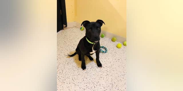 The puppy, Rudolph, was adopted earlier this month after his miraculous story went viral.