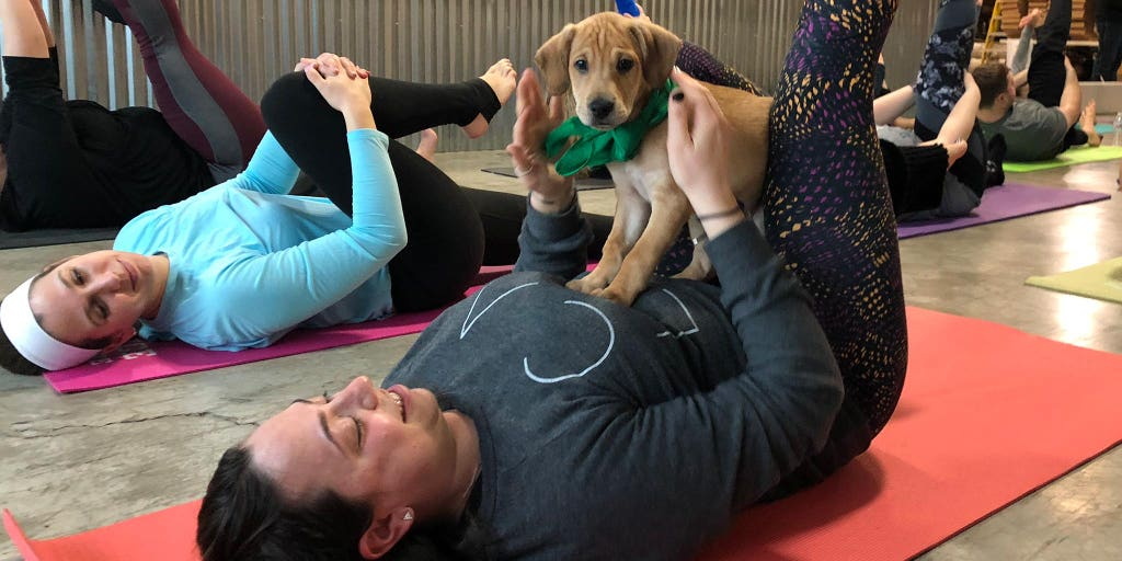 22d7060d30b2 Puppy yoga gaining popularity as a new twist on the workout   Fox News