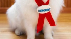 Duke, the 4-term dog mayor of Minnesota town, goes to 'doggy heaven'