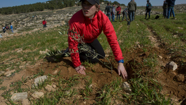Future rabbis plant with Palestinians, sow rift with Israel