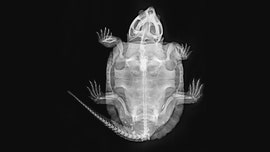 Stunning X-rays give rare glimpse of London Zoo's 18,000 animals