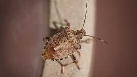 Polar vortex may have killed significant levels of invasive species of insects