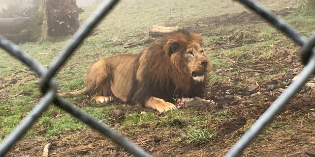An online petition demanding the zoo stops the practice has already received more than 2,000 signatures.