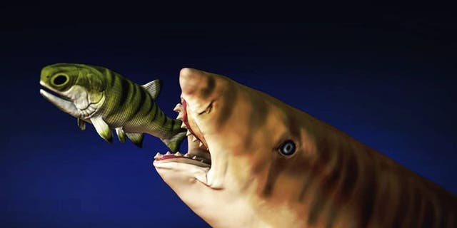 The unique curve of the shark's teeth allowed the shark to easily slice open its prey.