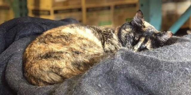 Edna the cat was evicted from Station 49 of the San Francisco Fire Department after the city received an anonymous complaint about her being around medical equipment.