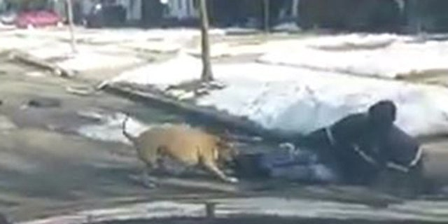 A dog attacked a mail carrier on Detroit's West Side on Friday.