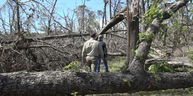 Timber farmer Glenn Earnest tours a Georgia forester through his 230 acres of damaged crop.