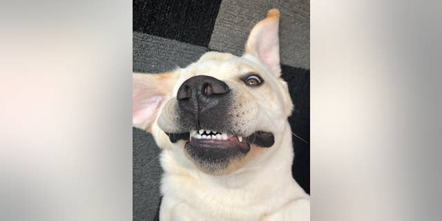Just look at those pearly whites.