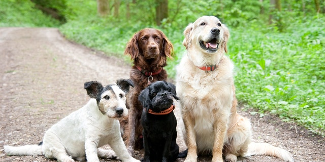 Dogs' personalities can change based their owners' personalities, a new study has found. (Stock image)