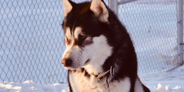 A Minnesota dog named Donald Trump was not shot and killed over politics, authorities said Wednesday. (GoFundMe)