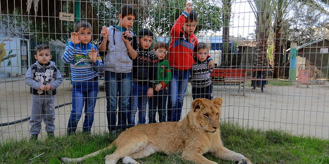 Palestinian children look through the fence of a lion cage at the Rafah Zoo in Gaza City, Gaza on February 13, 2019. Gaza's only animal care practice which was established 17 years ago faces closure due to economical problems caused by the Israeli blockade.