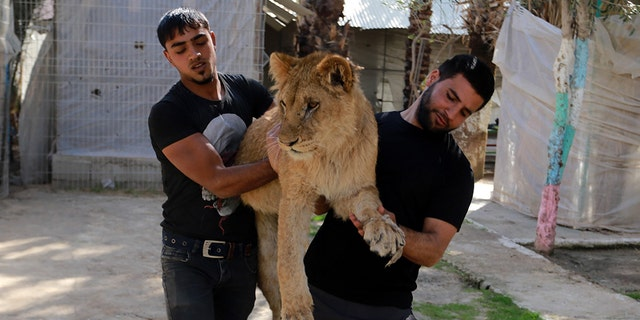Gaza's only animal care practice which was established 17 years ago faces closure due to economic problems caused by the Israeli blockade.