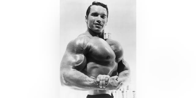 Circa 1967: Studio portrait of Austrian-born bodybuilder Arnold Schwarzenegger flexing his torso in an advertisement for a German protein product.