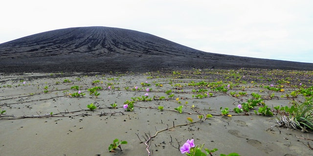 Vegetation taking root on the flat isthmus of Hunga Tonga-Hunga Ha'apai. The volcanic cone is in the background. (Credit: Dan Slayback)
