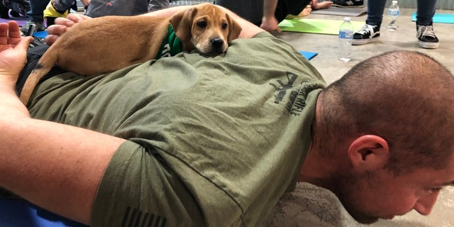An adoptable puppy lays on a participant's back during the class. (ROB DIRIENZO / FOX NEWS)