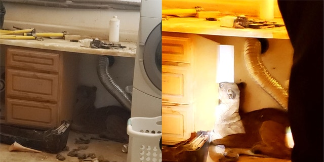 California resident Sean Ishol snaps a photo of a mountain lion lurking behind his washing machine.